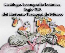 Im genes digitales for Anales del jardin botanico