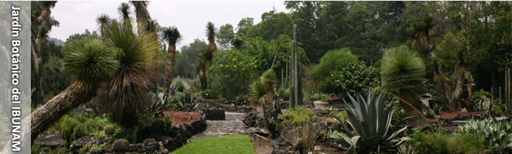 Semana nacional de la conservaci n for Jardin botanico unam 2015
